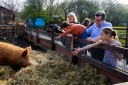 Children and Tamworth pig, Hackney City Farm, east London