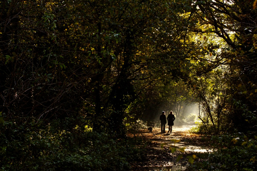 Two people walking in woodland in morning autumn sunshine