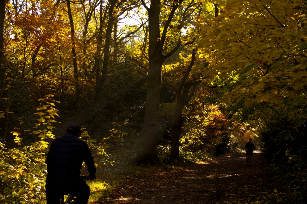 A cyclist and a walker in autumn woods on a sunny morning, as sunlight streams through the trees