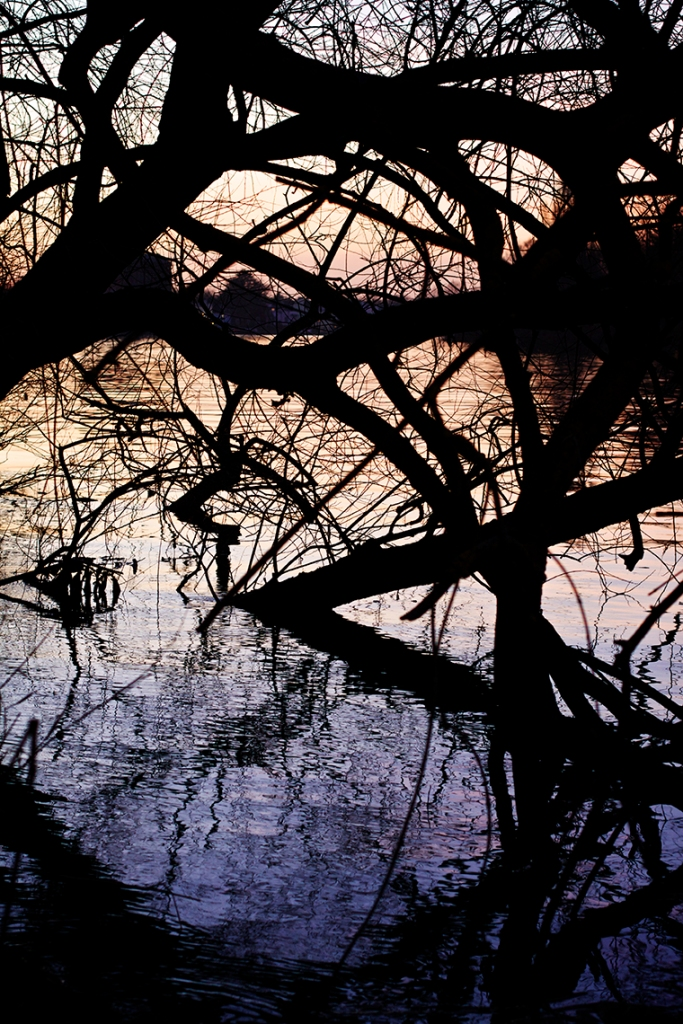 Abstract of trees in the water of the River Thames, London at sunset